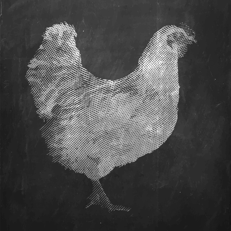 Chicken. Farm animal. Vintage engraved illustration on clean background. Çizim