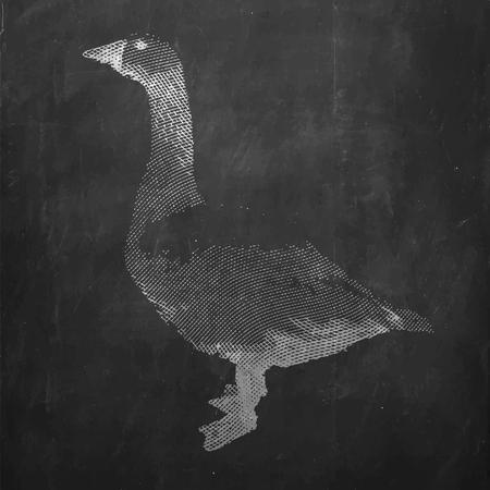 Goose. Farm animal. Vintage engraved illustration on chalkboard background.