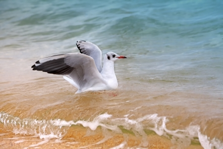 Seagull swimming in the sea photo
