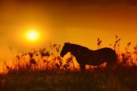 Horse silhouette at sunset photo