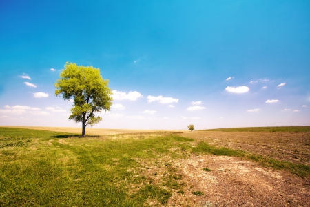 uncultivated: Alone tree in the uncultivated field