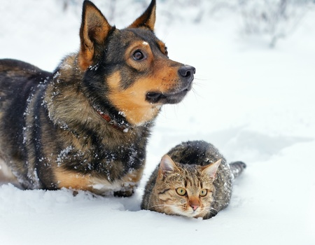 Dog and cat sitting in the snow photo