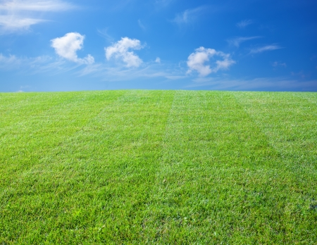 cut grass: Green lawn with blue sky