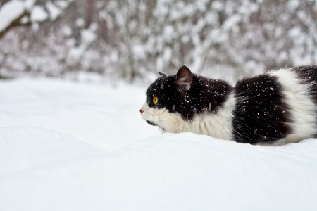 Cat sneaking in snow Stock Photo