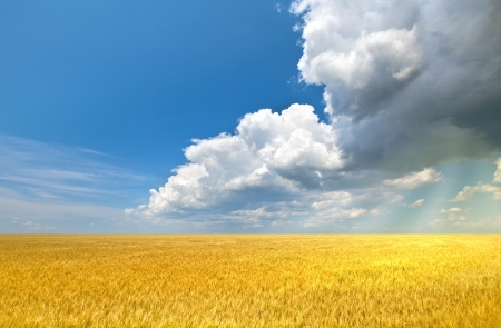corn flour: Sun rays flooding wheat field with light