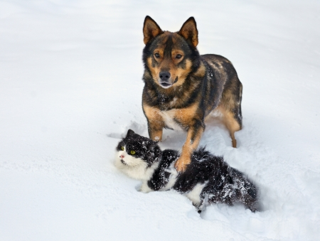 Cat and dog playing in the snow photo