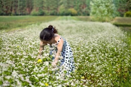 Young woman harvesting buckwheat Stock Photo - 17414241