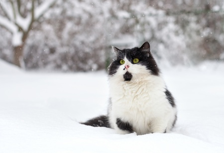 Chat se reposant dans la neige photo