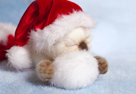 Little cat wearing Santa s hat  photo