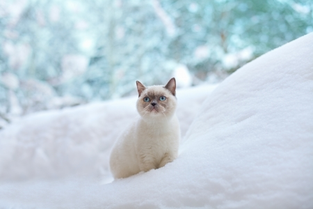 Cat sitting in snow photo