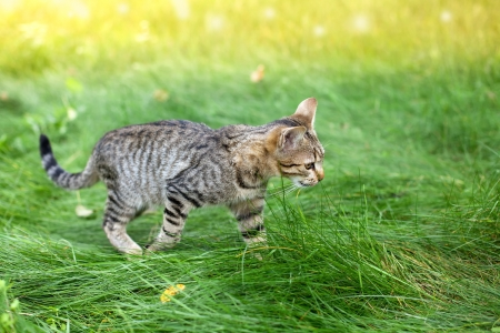 Cat walking in a grass Stock Photo