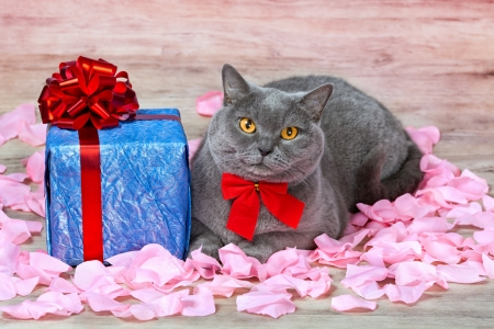 Cat sitting on the rose petals near gift with red ribbon photo