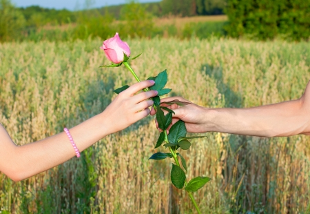 Two hands and the rose
