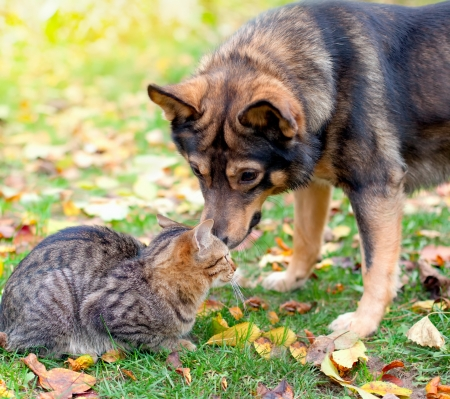 Dog and cat playing together  photo