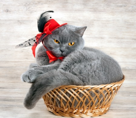 Cat wearing red hat lying in a basket photo