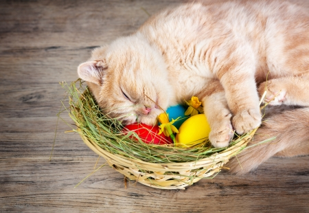 Little cream cat sleeping on the basket with colored eggs photo