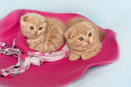 Two little cat lying on the pink hat photo
