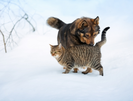 Dog and cat playing in the snow photo
