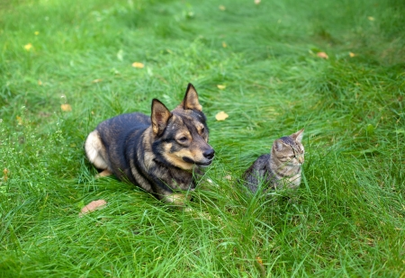 Cat and dog sitting together on the grass photo