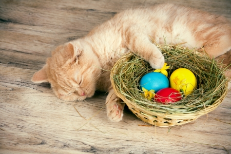Little cream cat sleeping near the basket with colored eggs photo