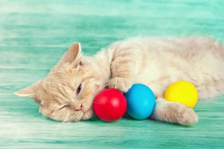 Little cream cat lying near colored easter eggs