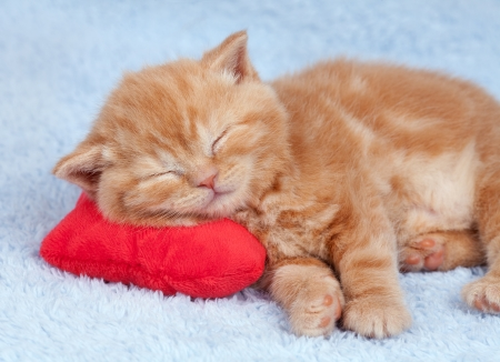 Little cat sleeping on the red heart-shaped pillow photo