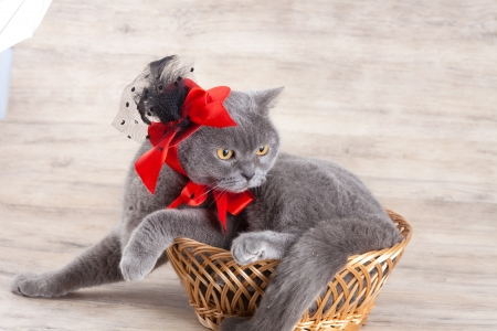 tendencies: Cat wearing red hat lying in a basket Stock Photo