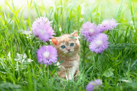 Cute little kitten sitting in flowers on the grass photo