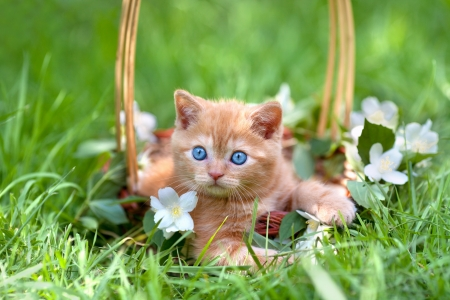 Little cute kitten sitting in a basket on the grass photo