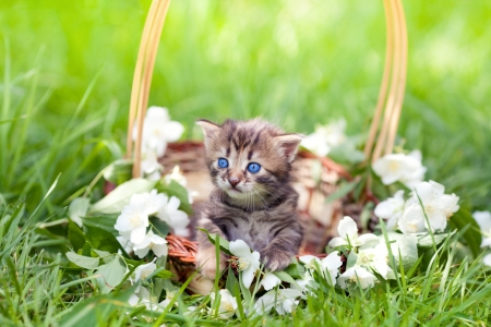 Little kitten sitting in a basket on the grass photo