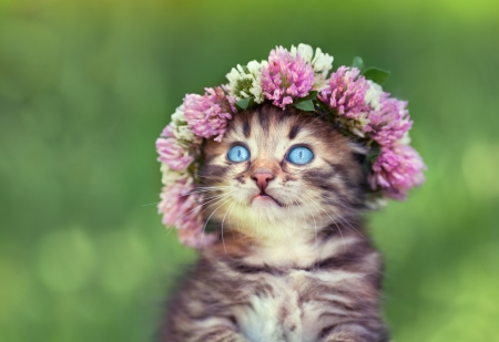 Portrait of cute dreaming little kitten crowned with a chaplet of clover