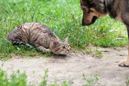 Dog and cat playing on the grass photo