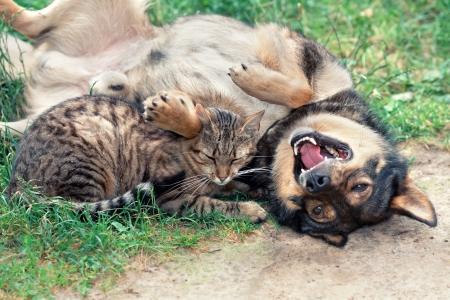 gato jugando: Perro y gato que juegan en la hierba Foto de archivo