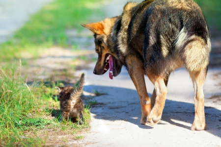 Dog walking with little kitten on the road Stock Photo