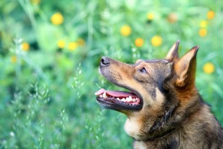 Portrait of dog on green background photo
