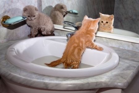 Little kittens bathing in the sink photo