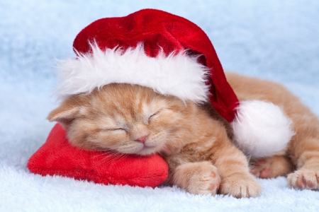 Little cat wearing Santa s hat sleeping on the red heart-shaped pillow Фото со стока