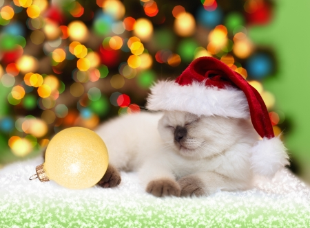 Little cat wearing sleeping against Christmas tree with lights Фото со стока