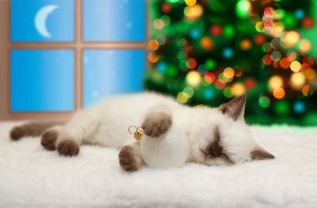 Little cat sleeping against window and Christmas tree with lights photo