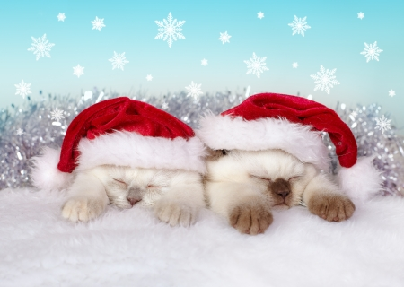 Little cats wearing Santa s hat sleeping photo