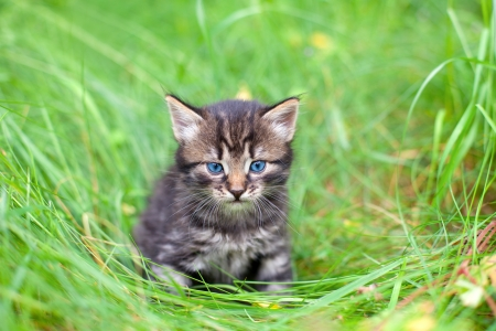 Little kitten sitting on the grass photo