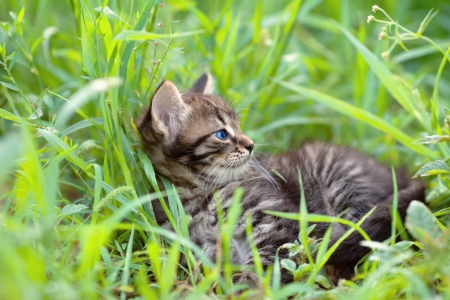 Little kitten lying on the grass photo