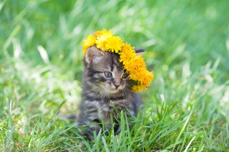 Cute little kitten crowned with a chaplet of dandelion walking on the grass Stock Photo