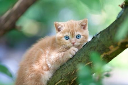 Kitten sitting on the tree photo