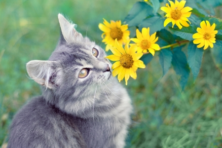Cute kitten sitting near yellow flowers Фото со стока