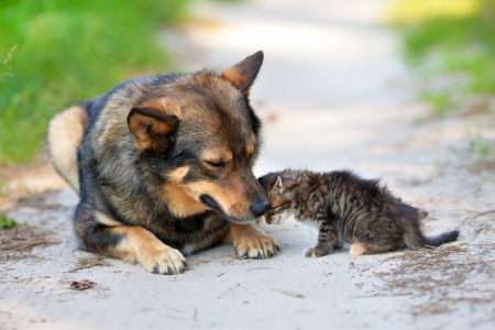 Little kitten leaned against the big dog Фото со стока