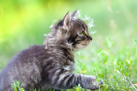Little kitten sprinkled with dandelion seeds photo