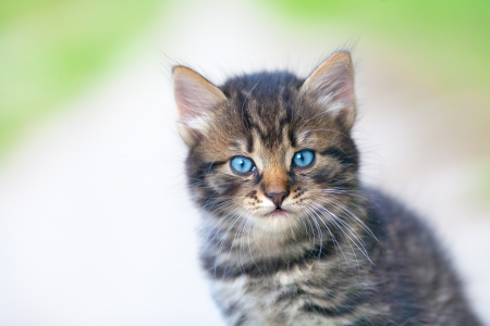 Portrait of little cute kitten photo