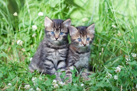 Two little kittens sitting on the grass photo