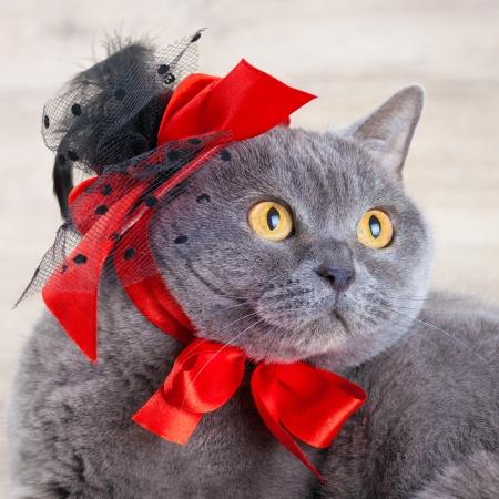 tendencies: Cat wearing red hat Stock Photo